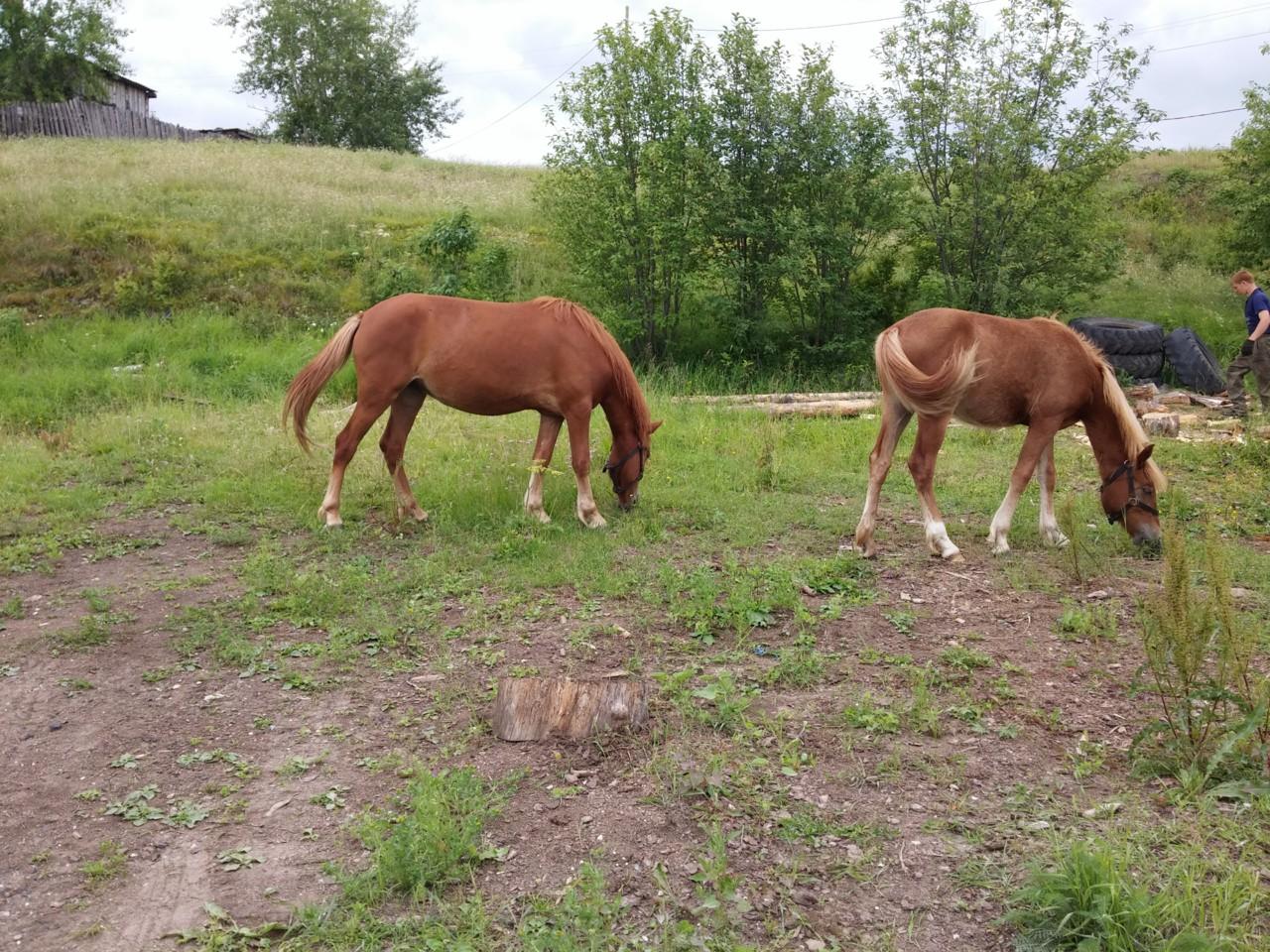 Лошадки на Горном
