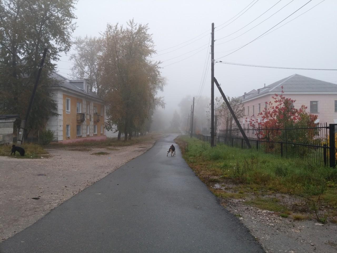 Туман. Дорога к шахматному клубу
